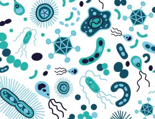 Info produit : Pourquoi est-il important de conserver un système digestif en bonne santé ?